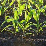 DVF: Landbrugsudspil overser fremtidigt milliard-marked