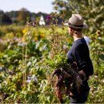 Nyt udspil: Økologiske landmænd opfordrer til reduktion af kødforbruget
