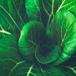 Bliv praktikant i hjertet af den grønne udvikling
