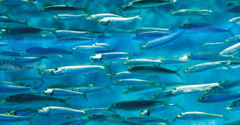 Stime af fisk