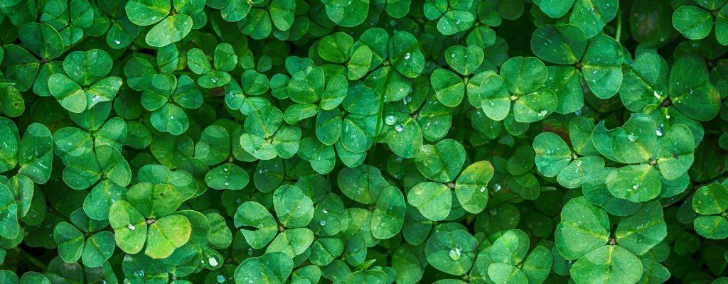 clover-1225988_1920-2