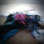 Pink toy dolphin caught in fishing net